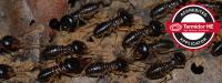 termite-treatment-melbourne.png